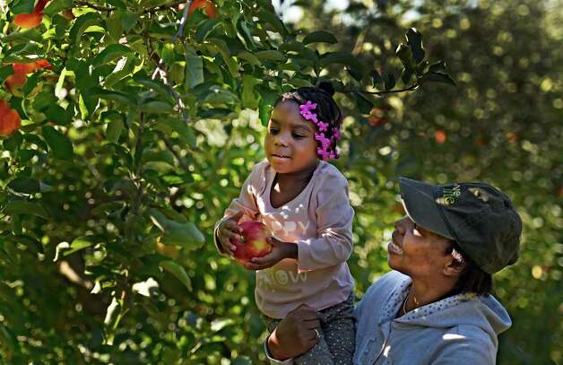 Kamaria Campbell, 3, gets a lift from her mother Ebi Campbell of Albany while picking apples Monday afternoon, Oct. 12, 2015, at Bowman Orchards in Rexford, N.Y. (Skip Dickstein/Times Union) Photo: SKIP DICKSTEIN / 10033728A