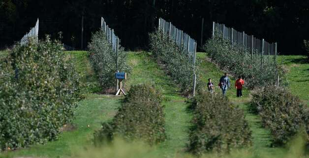 Apple pickers enjoy wonderful weather as they walk through the orchard Monday afternoon, Oct. 12, 2015, at Bowman Orchards in Rexford, N.Y. (Skip Dickstein/Times Union) Photo: SKIP DICKSTEIN / 10033728A