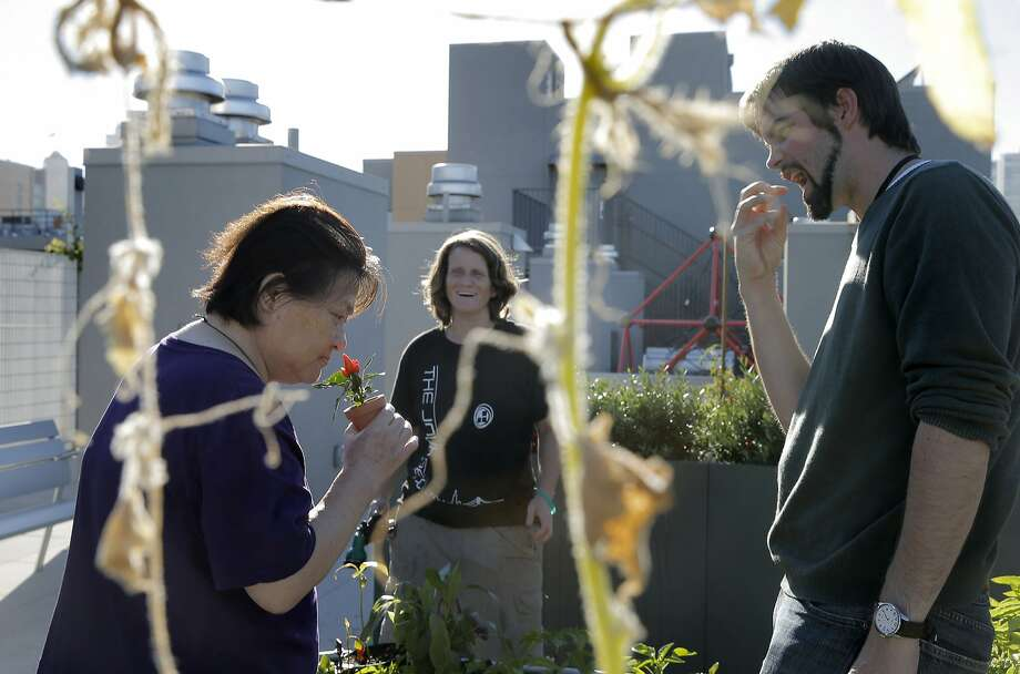 Xiao Lian Mao, left, sniffs a chile pepper plant as Kyle Golden, Intensive Case Manager for the CCDC, right, and Danielle Williams, center watch on the rooftop tenant garden at the Sansom Broadway Apartments in San Francisco, Calif., on Monday, October 12, 2015. The Chinatown Community Development Center was built on surplus city property and Proposition K on the November ballot would make city departments to come up with a list of unused property and allocate it for housing needs. Photo: Carlos Avila Gonzalez, The Chronicle