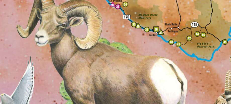 Far West Texas trail Sights to see: Montezuma Quail, Pronghorn Antelope, rugged terrain, historic structures, Cactus Wren, ancient pictographs, black-tailed jackrabbit, Chihuahuan DesertClick to view the interactive map  Photo: Texas Parks & Wildlife Department
