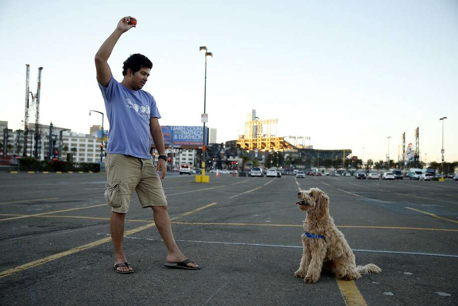 Across the street from his residence, Prapeek Guppa works on training his dog, Lola, in Lot A just south of AT&T Park in San Francisco, Calif., on Monday, October 12, 2015. Photo: Scott Strazzante, The Chronicle