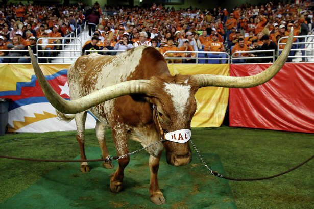 SAN ANTONIO, TX - DECEMBER 30:  Texas Longhorns mascot Bevo wears a harness in honor of head coach Mack Brown during the Valero Alamo Bowl against the Oregon Ducks at the Alamodome on December 30, 2013 in San Antonio, Texas.