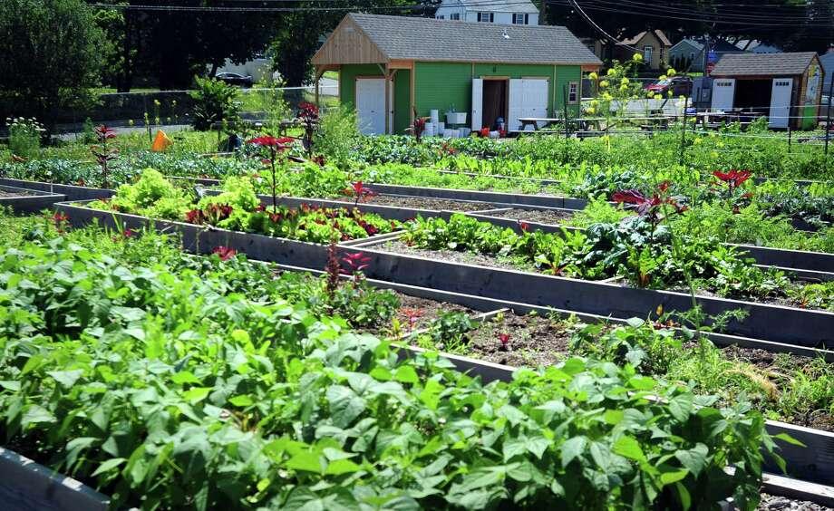 Reservoir Community Farm In Bridgeport Is One Of The Cityu0027s 13 Neighborhood  Gardens Photo: Autumn