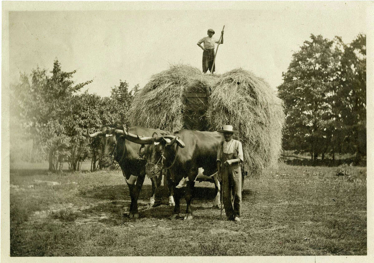 African-American laborers work on the Solomon Mead farm (the corner of Riversville Road and Cliffdale Road) circa 1905.