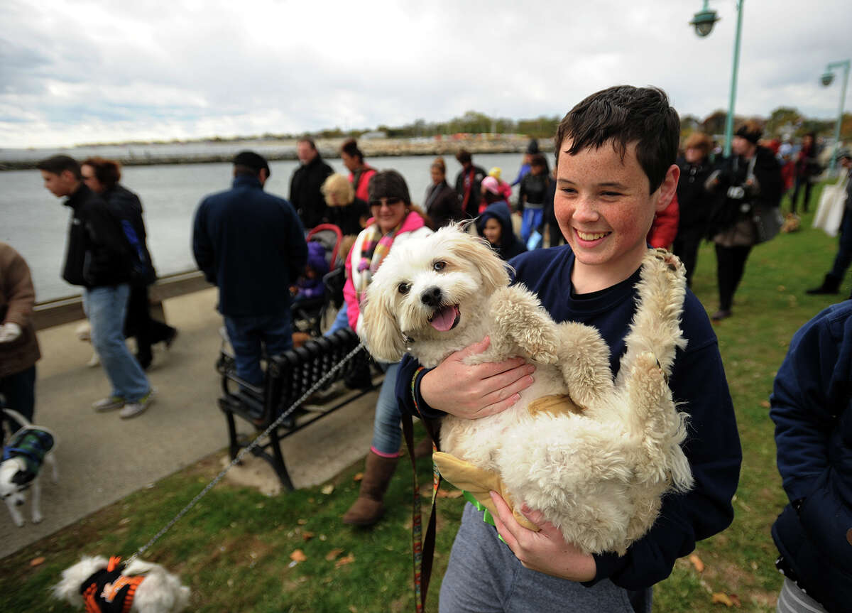 Joseph Moran, 12, of Bridgeport, carries mix-breed Shotzi in the annual Walk with Harold dog walk fundraiser at St. Mary's By-The-Sea in Bridgeport, Conn. on Sunday, October 18, 2015. The walk, which also featured a dog costume contest, raised money for the Connecticut Audubon Society, Bridgeport Animal Shelter, and Black Rock School's Nature's Classroom.