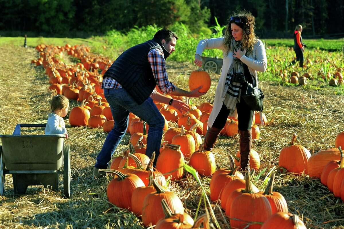 Adam Price, of Fairfield, grabs a pumpkin handed to him by his wife Mary as they spend the afternoon with their daughter Brooklyn, 21 months, at Jones Family Farms' Pumpkinseed Hill Farm off of Beardsley Road in Shelton, Conn. on Saturday October 10, 2015. The farm will be open daily from 10 a.m. to 5:30 p.m. through October 31st.