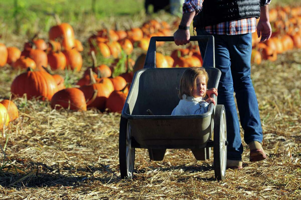 Brooklyn Price, 21 months, gets a ride from dad Adam, of Fairfield, as they spend the afternoon at Jones Family Farms' Pumpkinseed Hill Farm off of Beardsley Road in Shelton, Conn. on Saturday October 10, 2015. The farm will be open daily from 10 a.m. to 5:30 p.m. through October 31st.