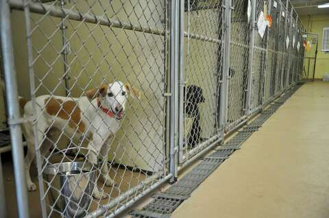 Humane Society has dogs to adopt from flooded SC - Times Union