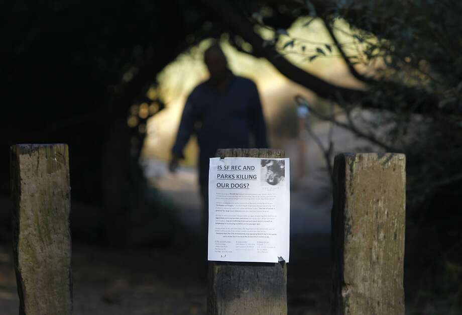 A man walks on a trail at Glen Canyon Park towards a notice posted by a neighbor, who says their dog had died from exposure to pesticides used in city parks, in San Francisco, Calif. on Thursday, Oct. 22, 2015. Dog owners and parents are concerned about the apparent use of an herbicide known as glyphosate in the park. Photo: Paul Chinn, The Chronicle