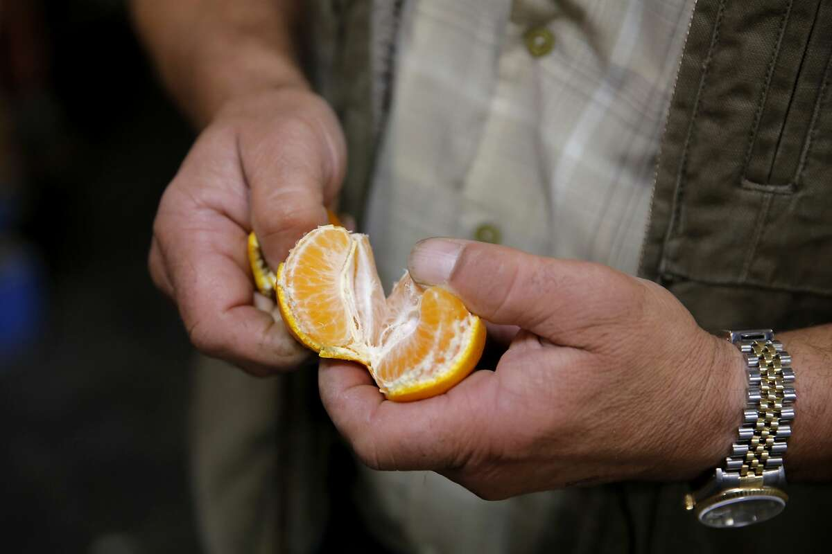 Gus Vardakastanis peels and inspects a citrus at the San Francisco Wholesale Produce Market in San Francisco, California, on Thursday, Oct. 22, 2015.