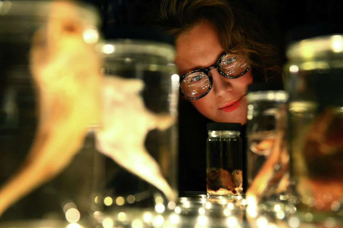 Kate Jenks examines the fish collection on display at the Burke Museum's Creepy-Crawly Cocktails event, Thursday, Oct. 22, 2015. Guests were able to get up close and personal with snakes, snails, bats and other creepy critters.
