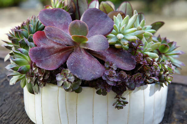 Easy To Grow Succulents Thrive In Less Than Ideal Conditions
