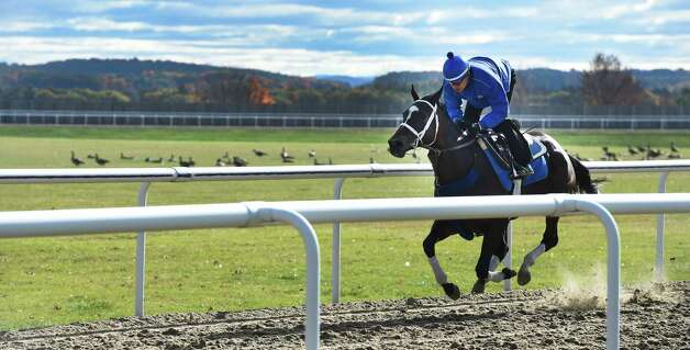 Breeders' Cup entrant Wedding Toast puts in her final tune up under the exercise rider Miguel Jaimey at the Darly Farm compound Friday morning Oct. 23, 2015 in Saratoga Springs, N.Y.    (Skip Dickstein/Times Union) Photo: SKIP DICKSTEIN
