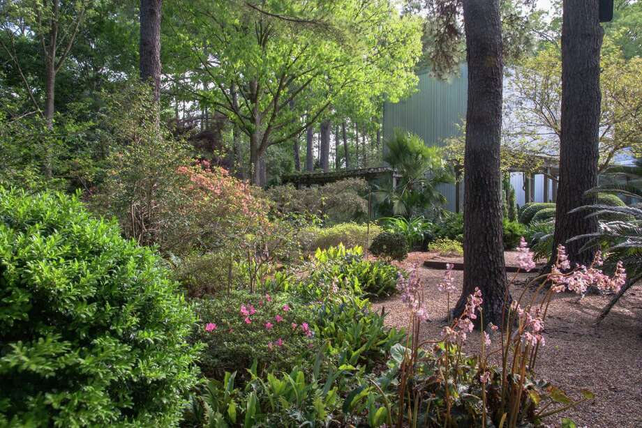 Peckerwood Garden.  (For many, many more photos, scroll through the slideshow.) Photo: Larry Lederman, Peckerwood Garden / Larry Lederman / Larry Lederman, 2014