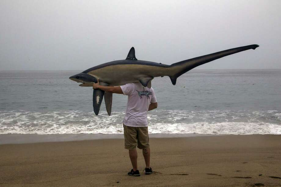 A man walks with a figure of a shark before the arrival of hurricane Patricia in Puerto Vallarta, Mexico on October 23 ,2015. Monster Hurricane Patricia roared toward Mexico's Pacific coast on Friday, prompting authorities to evacuate villagers, close ports and urge tourists to cancel trips over fears of a catastrophe. The US National Hurricane Center called Patricia the strongest eastern north Pacific hurricane on record. It said the storm will make a potentially catastrophic landfall later Friday in southwestern Mexico.    AFP PHOTO/HECTOR GUERREROHECTOR GUERRERO/AFP/Getty Images Photo: HECTOR GUERRERO, Stringer / AFP / Getty Images / AFP