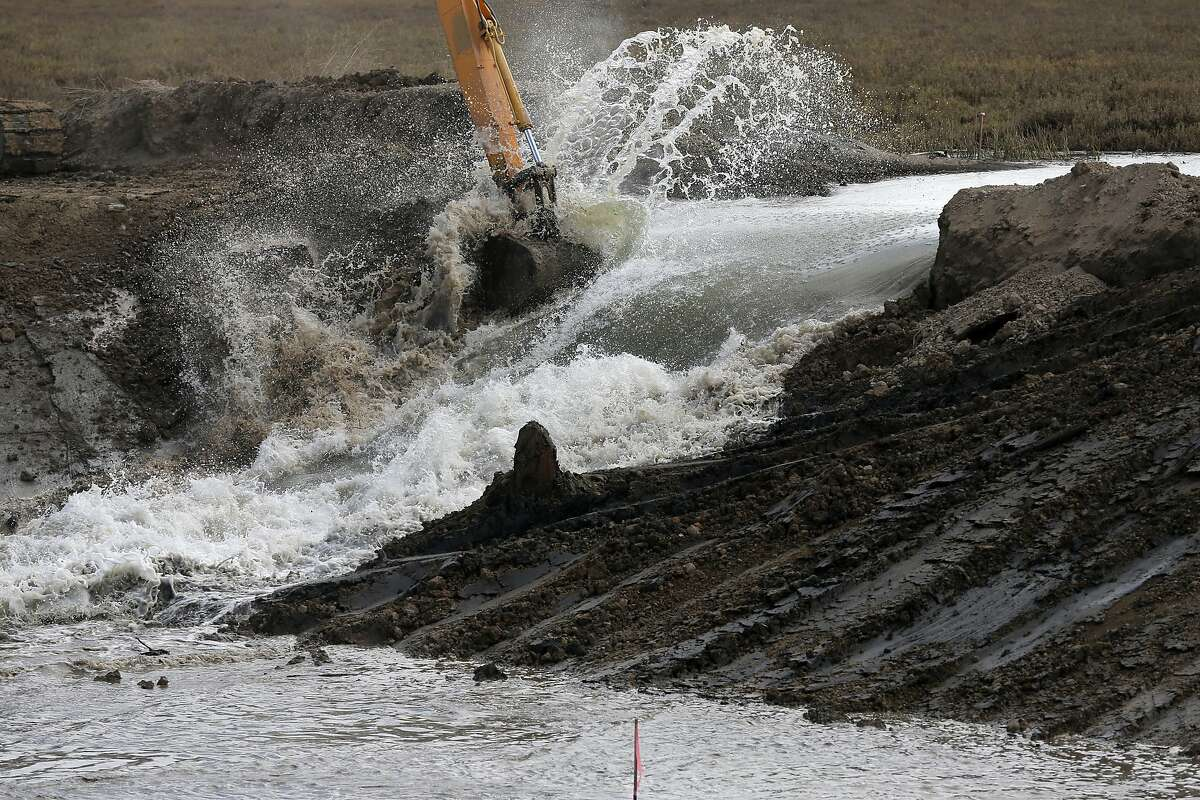 Water gushes through a levee in Sonoma County, assisted by a few scoops from a mechanical excavator.