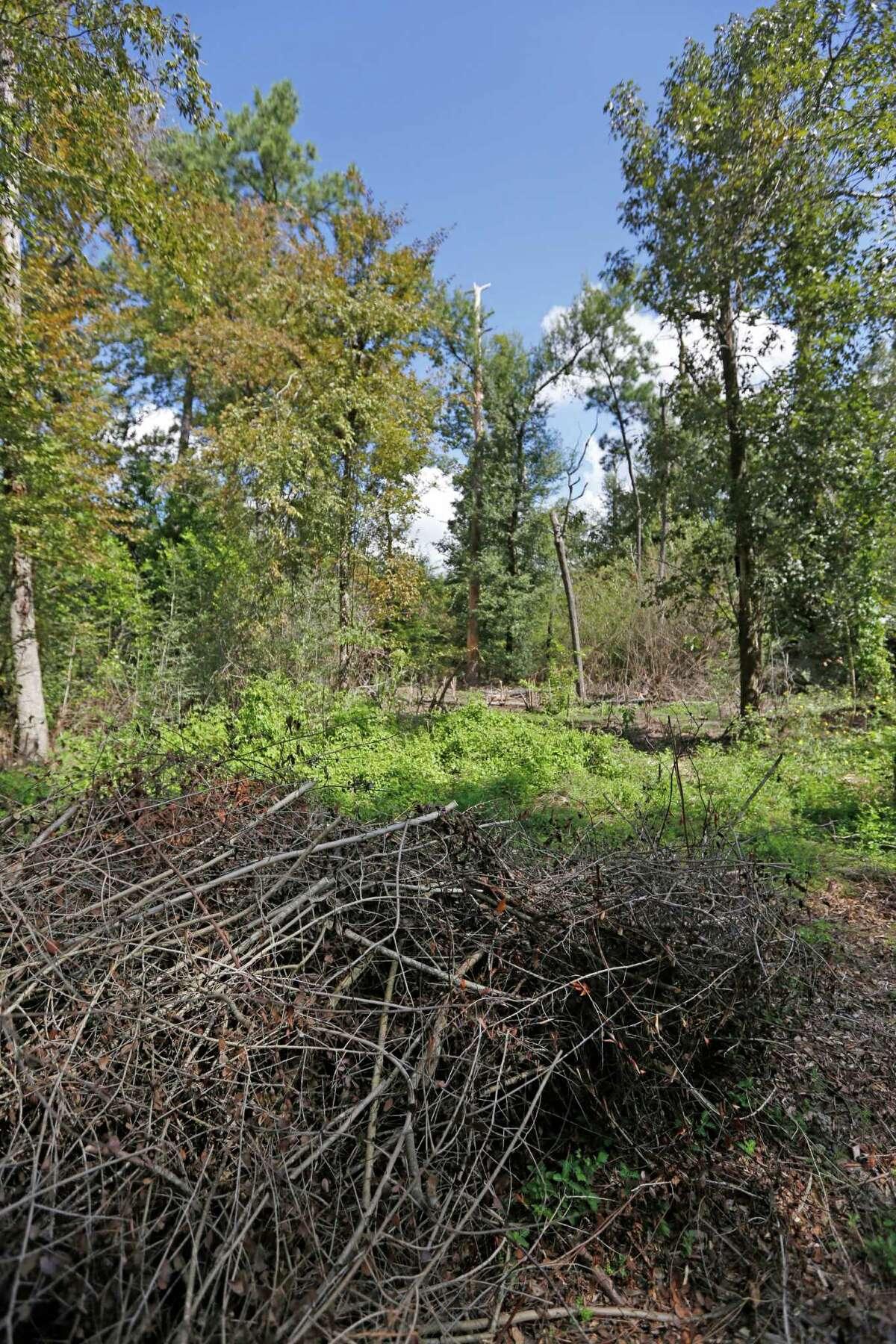 Stacks of cut brush and invasive plants at The Houston Arboretum & Nature Center trails.