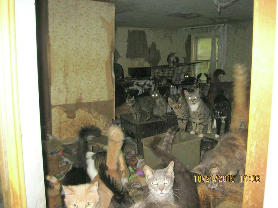 A photo of a house in Westerlo where cats were being hoarded, Oct. 26, 2015. (Courtesy of Albany County Sheriff's Department.) Photo: Picasa