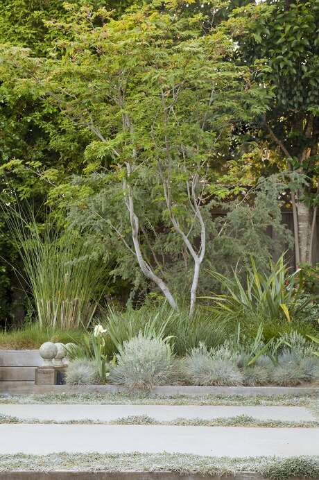 The renovated backyard of Alice and Dennis Oliver's San Mateo home. Photo: Caitlin Atkinson