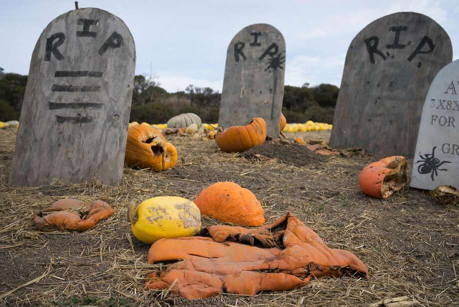 A rotten pumpkin is seen at Rodoni Farms in Santa Cruz, Calif. on Tuesday, Oct. 27, 2015. Due to the drought and excessive heat pumpkins have been scarce. Photo: James Tensuan, Special To The Chronicle