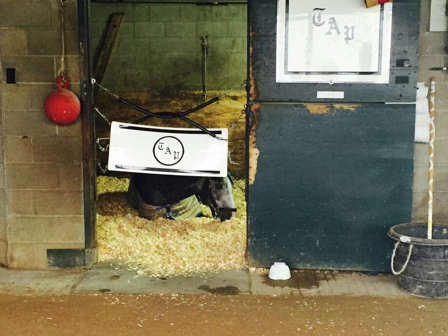 You remember Liam's Map from the summer at Saratoga, don't you? He was the lightning-fast horse who won the Woodward Stakes at the end of the meet and darn near won the Whitney earlier in the summer. I got part of the reason for his success when I ventured out to trainer Todd Pletcher's barn on a rotten, rainy Kentucky Tuesday morning. Besides being incredibly swift, Liam's Map likes to take maps. Whenever he feels like it. Here was the big, grey boy sawing some wood after training hours. The even money favorite in the Breeders' Cup Dirt Mile doesn't appear to be too concerned about his race, which comes up on Friday. —Tim Wilkin