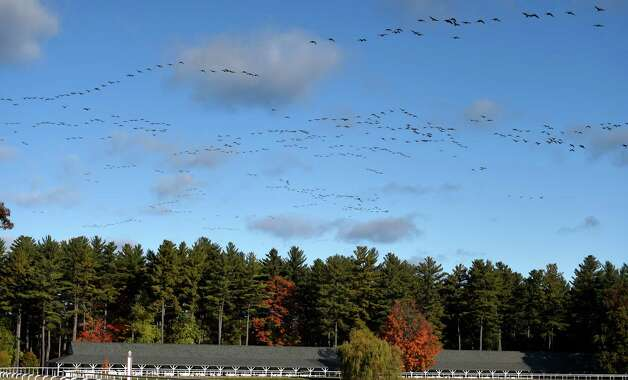 Hundreds of geese fly in a southerly direction over the Darly Farm compound Friday morning Oct. 23, 2015 in Saratoga Springs, N.Y.    (Skip Dickstein/Times Union) Photo: SKIP DICKSTEIN