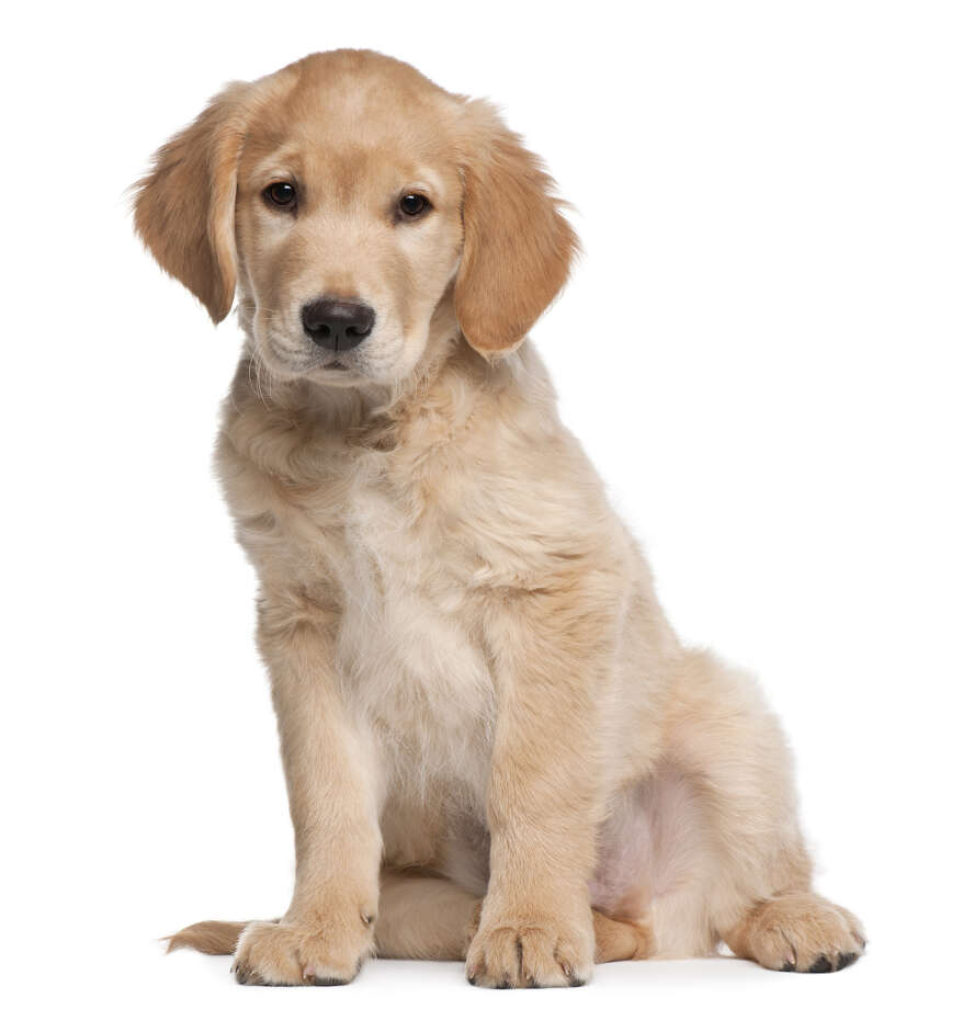 The Dog Land app links you to dog lovers as well as canine resources nearby and all over the world. Photo: Eric Isselée / Eric Isselée - Fotolia