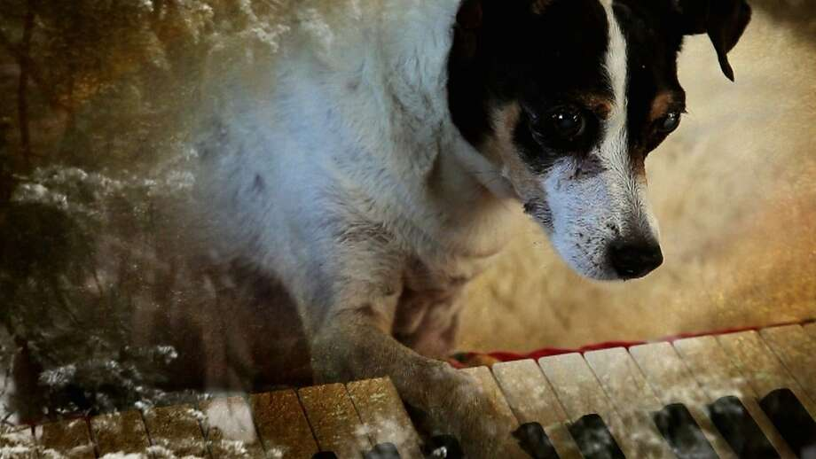 """A still from Laurie Anderson's film """"Heart of a Dog"""" Photo: Abramorama"""
