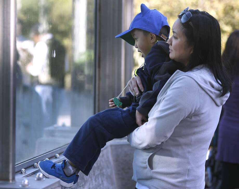 Four-year-old Kyle  and his mother, Michelle Hom, get a sneak peek at the San Francisco Zoo's new male lion cub. Photo: Paul Chinn, The Chronicle