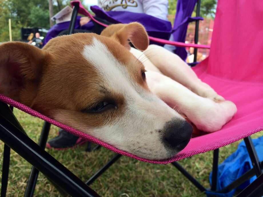 The American Cancer Society held their Bark for Life event at Tyrrell Park on Saturday, Nov. 8, 2014. This event brought out pups of all shapes and sizes to raise money that benefits patient services and programs.