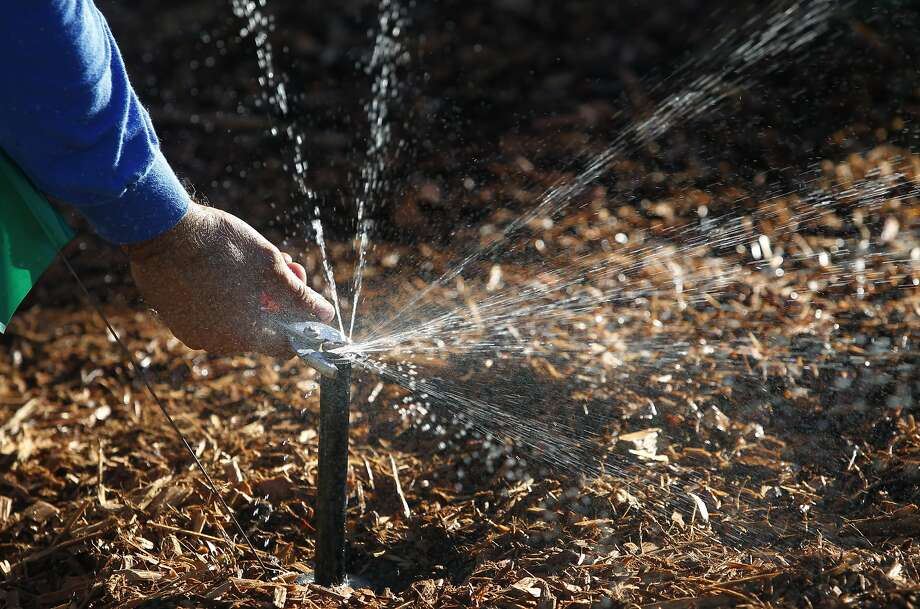 Sam Anguiano adjusts a high efficiency nozzle to a sprinkler head to complete a project converting a lawn to a drought resistent sustainable garden in Concord, Calif. on Friday, Oct. 30, 2015. The Cowell Homeowners Association has been able to dramatically reduce its water use while maintaining its landscaping using an effective water management program. Photo: Paul Chinn, The Chronicle