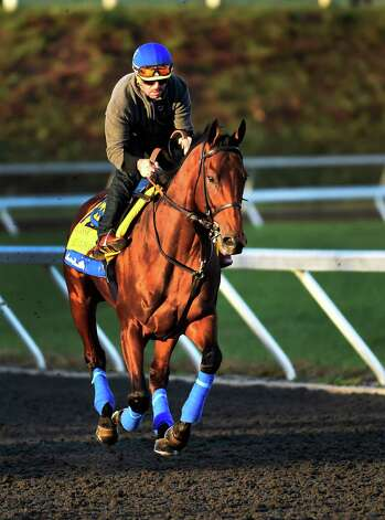 Breeders' Cup Classic entrant and Triple Crown winner American Pharoah goes out for exercise on the training track of Keeneland Race Course Thursday morning Oct. 29, 2015 in Lexington, KY.  (Skip Dickstein/Times Union) Photo: SKIP DICKSTEIN