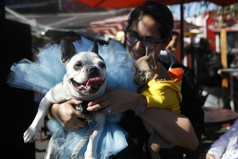 From left, Monti and Teddy are held by their owner Tunia Walker during the  Haloween Pet Parade in SOMA Saturday, October 31 2015 in celebration of Halloween in San Francisco, Calif. Photo: Fran Smith