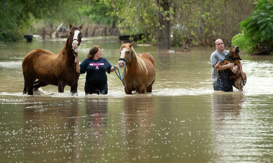 Rhonda Burnett rescues her horses from her home on Citation Drive in Garfield, Texas, while Lee Hays helps a neighbor's dog on Saturday, Oct. 31, 2015. Dozens of homes on the street, on the banks of the Colorado River, were flooded in the wake of recent rain. (Jay Janner/Austin American-Statesman/TNS) Photo: Jay Janner, MBR / McClatchy-Tribune News Service / Austin American-Statesman