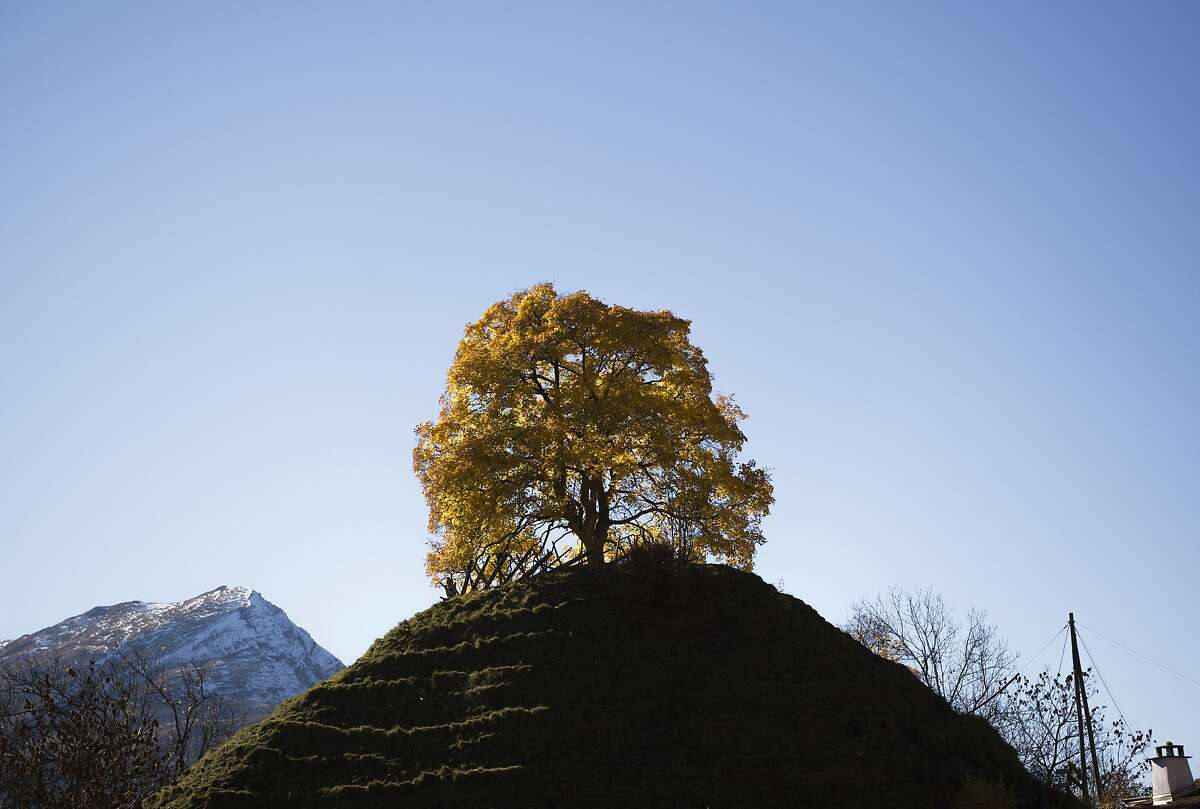 A autumnally colored tree stands on a hill in front of a snow covered mountain top in St. Peter, Canton of Grisons, eastern Switzerland, Saturday, Oct. 31, 2015.