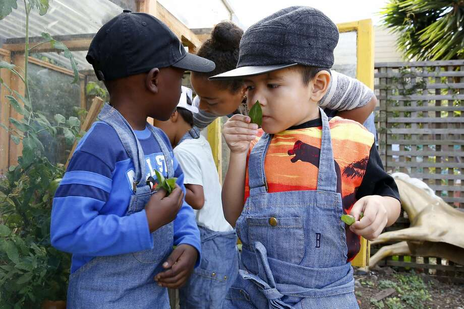At Bay Leaf Kitchen in S.F., Joaquin, 4, (right) smells an herb during class. Photo: Connor Radnovich, The Chronicle