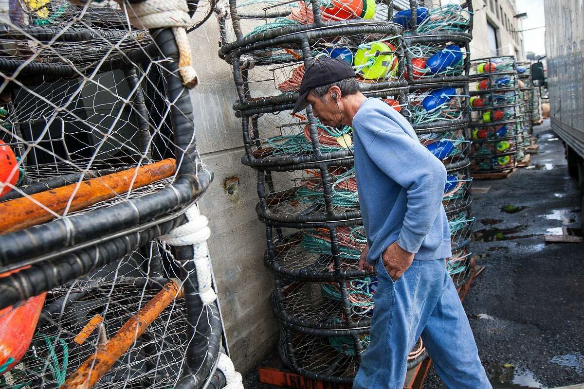A man walks past crab pots at Pier 45, Monday, Nov. 2, 2015, in San Francisco, Calif. A toxic algae bloom in the Pacific may delay the start of Northern California's Dungeness crab season, which is set to start this Saturday for recreational fishermen and a week later for the commercial season. State officials are currently testing crabs for the presence of domoic acid, a neurotoxin that can cause memory loss, seizures and even death when consumed by humans.