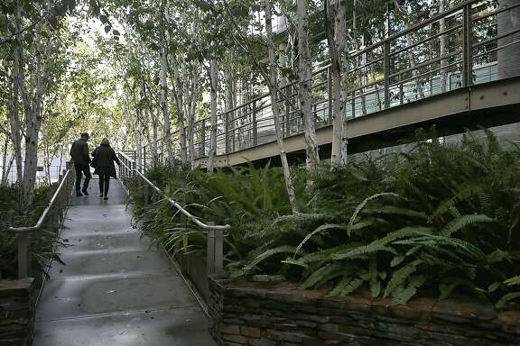 Principal designer Marta Fry and design director James Munden show their birch grove at 350 Rhode Island Street in San Francisco, Calif., on Monday, November 2, 2015.