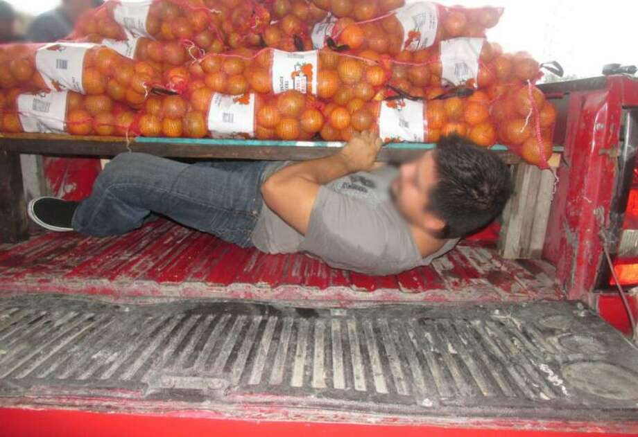 Four undocumented immigrants were found hiding in a pickup bed under a load of oranges at the Falfurrias Checkpoint, Nov. 1, 2015. (U.S. Customs and Border Protection)