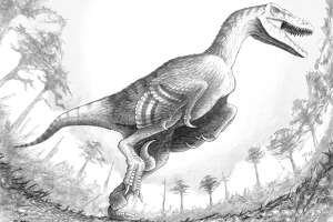 Newest dinosaur discovered is a seriously badass giant raptor - Photo