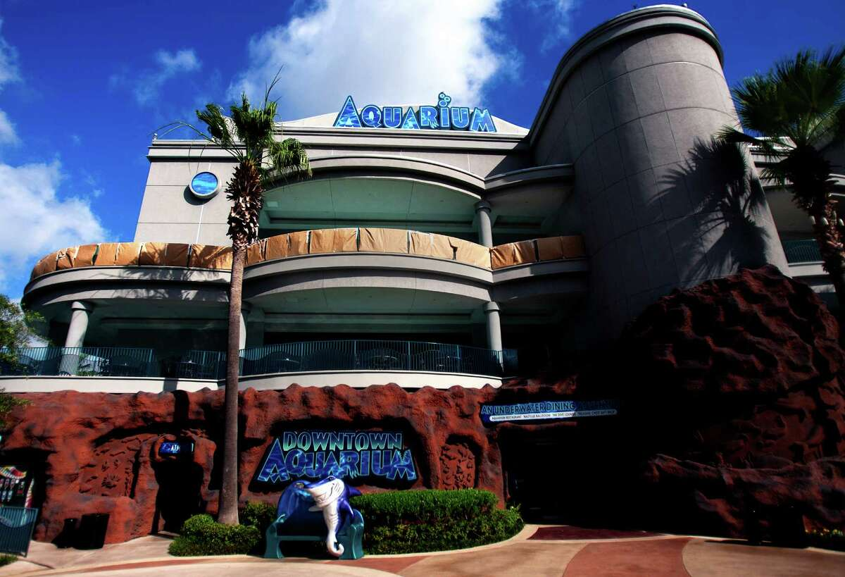 In addition to its aquatic and geographic exhibits, the Downtown Aquarium has a full-service restaurant and bar, a ballroom and shops.