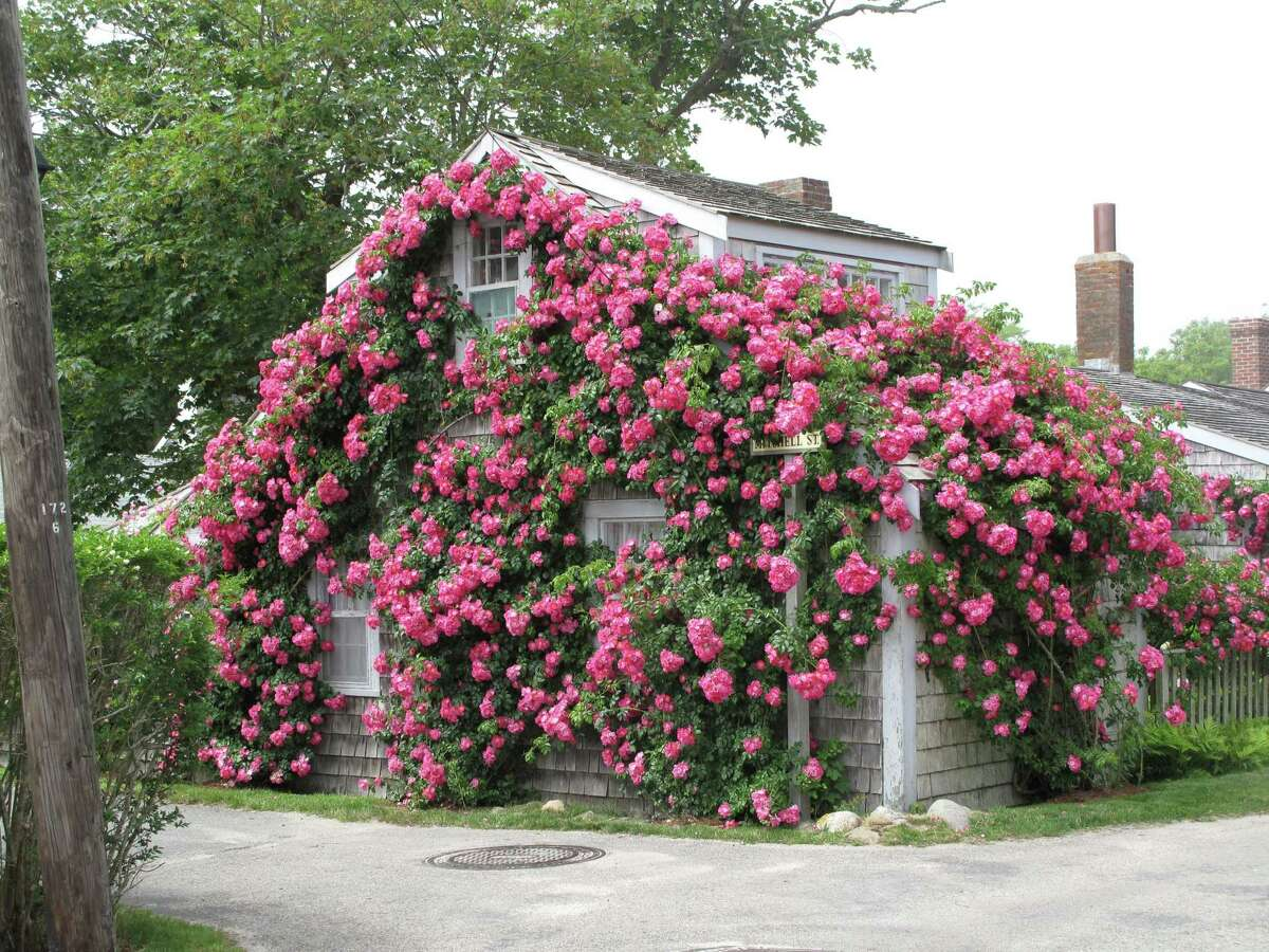 A whaler's rose-covered home in Nantucket.