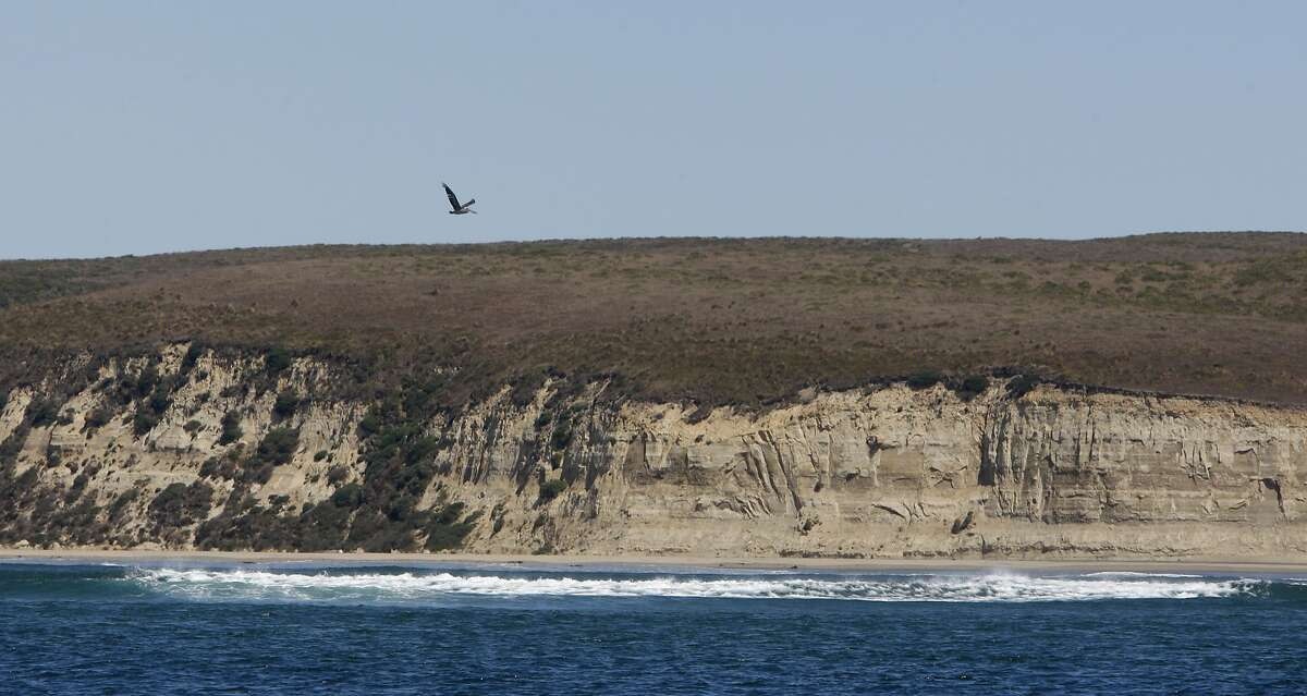 A pelican flies near the white cliffs, that Sir Francis Drake noticed on his arrival at Drakes Bay.