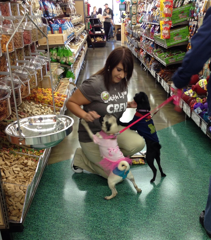 Costco Home Store Locations: Retail Wrap: Pet Supplies Plus, Burlington, Costco Open