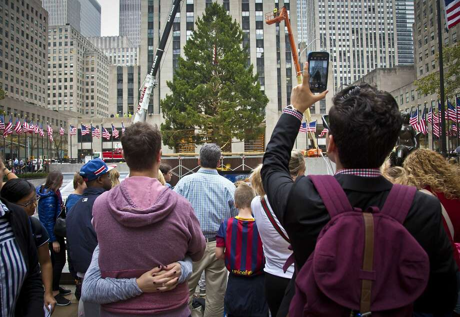A Norway Spruce at least 75 feet high, from Gardiner, N.Y., draws attention after being placed in its new location as the 2015 Rockefeller Center Christmas tree, Friday, Nov. 6, 2015, in New York. (AP Photo/Bebeto Matthews) Photo: Bebeto Matthews, Associated Press