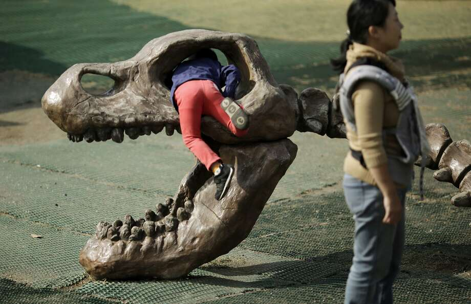 A child plays with a model of skeletal dinosaur at a zoo in Yokohama, Saturday, Nov. 7, 2015.  Photo: Eugene Hoshiko, Associated Press
