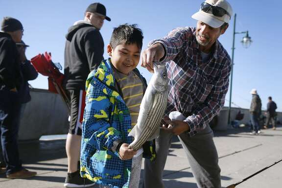 Sean Santos (left), 7, admires the 18-and-a-half inch striped bass that he landed with the help of his grandfather Ramon Mata on the municipal pier in Pacifica, Calif. on Saturday, Nov. 7, 2015. It was Sean's first fish he ever caught. A ban on recreational crabbing has been ordered by the state Fish and Game Commission because of potential domoic acid toxicity.