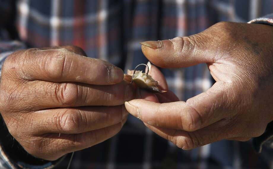 Ramon Mata baits a hook with a sand crab while fishing off the municipal pier in Pacifica, Calif. on Saturday, Nov. 7, 2015. A ban on recreational crabbing has been ordered by the state Fish and Game Commission because of potential domoic acid toxicity. Photo: Paul Chinn, The Chronicle