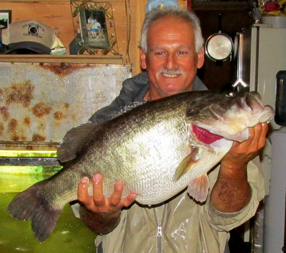 Roy Euper of Lufkin holds a 13.2-pound largemouth bass he caught Nov. 2 from Sam Rayburn Reservoir. The fish is the 564th 13-pound or heavier largemouth donated to Texas' ShareLunker program. Photo: Picasa