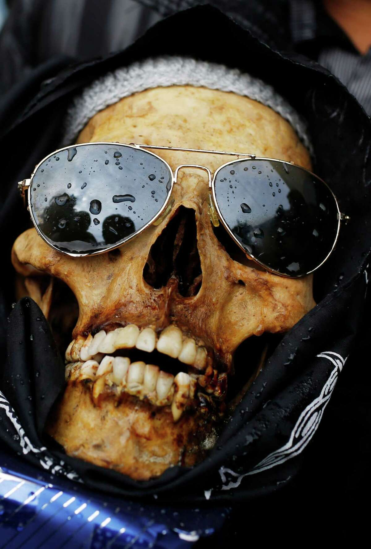 A human skull or